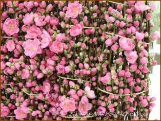 20170208  枝もの  2   花の展覧会