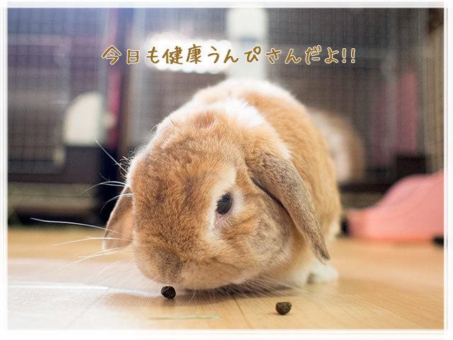 cookieblo1702075.jpg