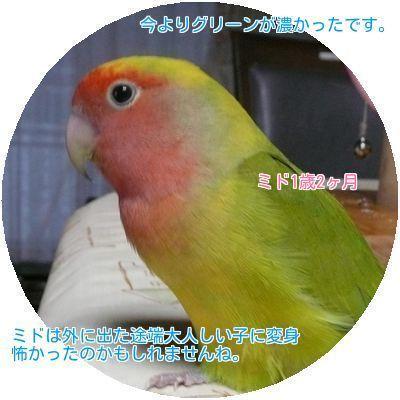 ⑤ミド第2の鳥生