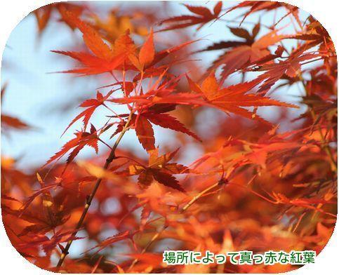 ⑧紅葉が綺麗