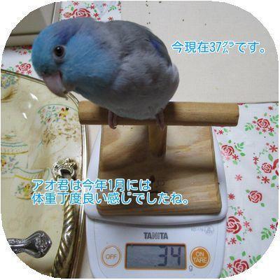 ④アオ君の体重