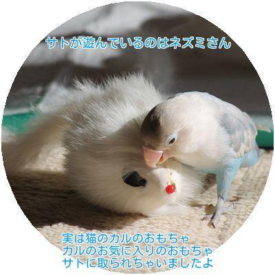 ①サトネズミと遊ぶ
