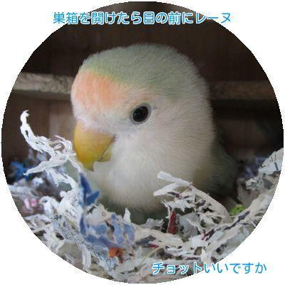 ①3日ぶりの巣箱の中
