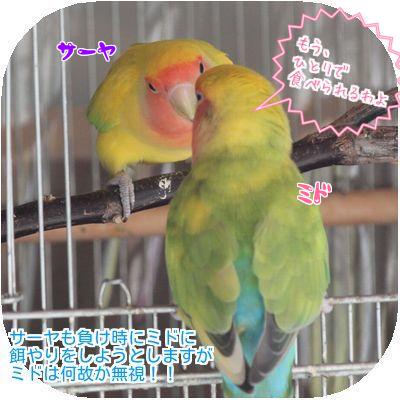 ④ミドとサーヤ