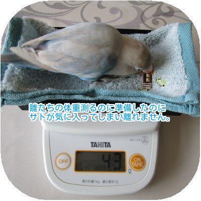 ①サトの体重は