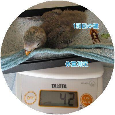 ⑧体重測定①
