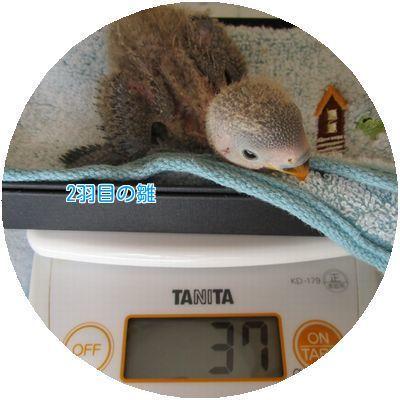 ⑨体重測定②