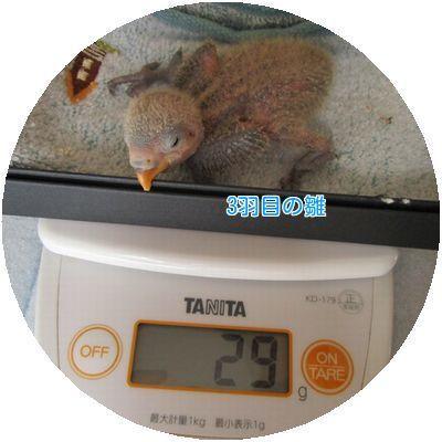 ⑩体重測定③