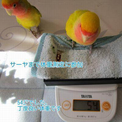 ⑫サーヤも体重測定