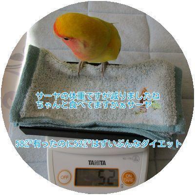⑨サーヤの体重