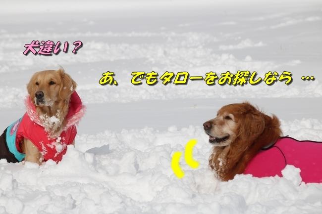 冬の白馬遠征 864
