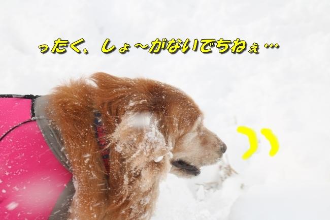冬の白馬遠征 508