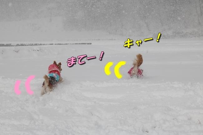 冬の白馬遠征 578