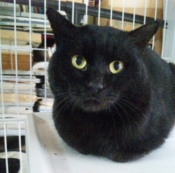 黒猫011203