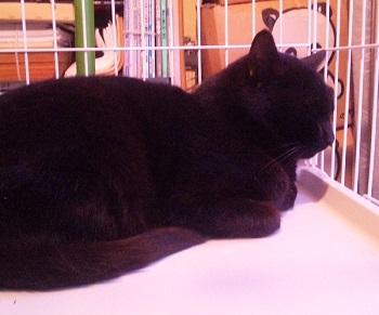 黒猫011204