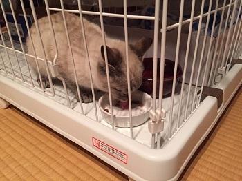 ニャー保護猫 image6