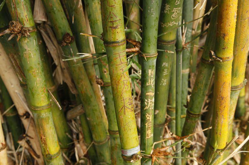 竹と落書き