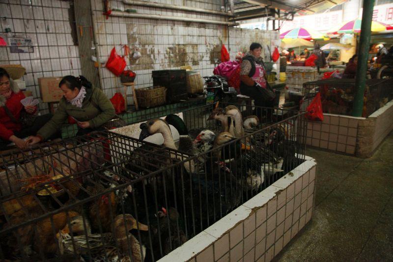 中国の市場の鴨