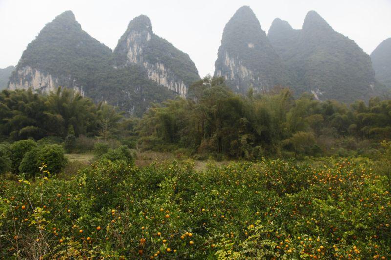 山とミカン畑