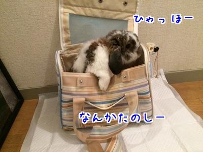 IMG_5074.jpg