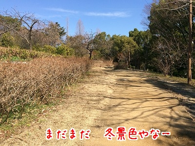 IMG_5260.jpg