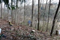 樹木の伐採現場