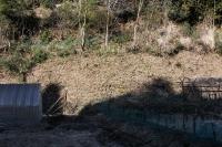 クロガリの除草2