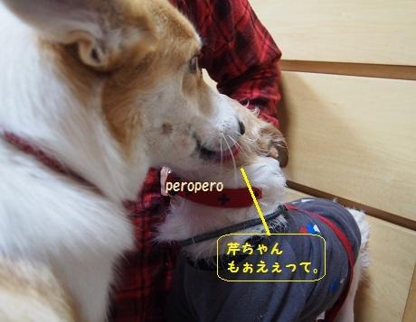 ぺろぺろきぃちゃん