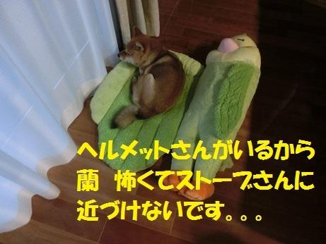 CIMG9198.jpg