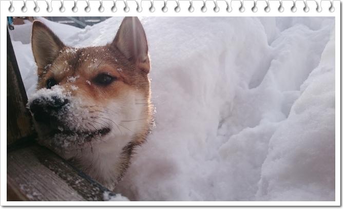 雪山ベランダで②