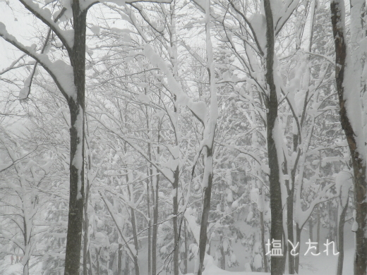 IMGP1105_20170124_27_雪山修行