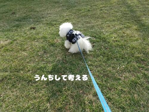 fc2_2017-01-31_09-20-42-989.jpg