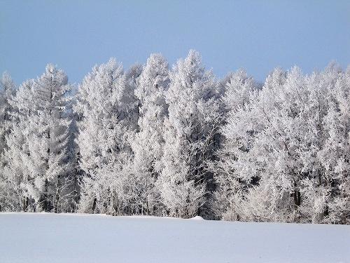 s-白い森