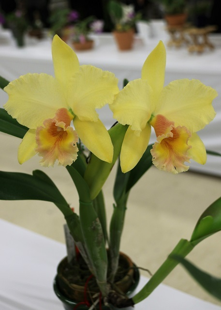 "Rlc.George King ""Southern Cross"""