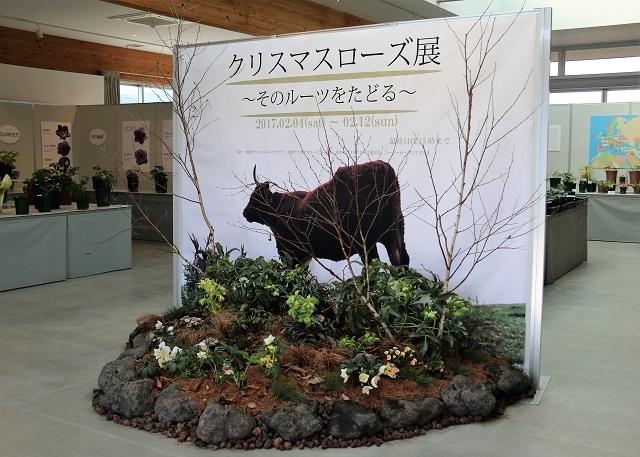 花菜ガーデン クリスマスローズ展