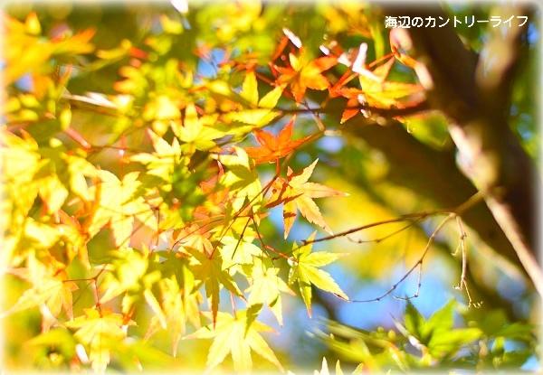 20161110185754ada.jpg