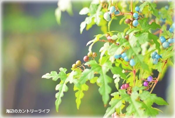 2016111221461668c.jpg