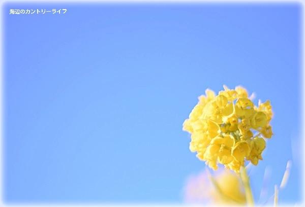 20170116212004733.jpg
