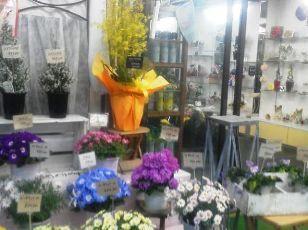 1月の店・花鉢