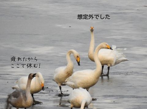 20161212hakutyo2.jpg