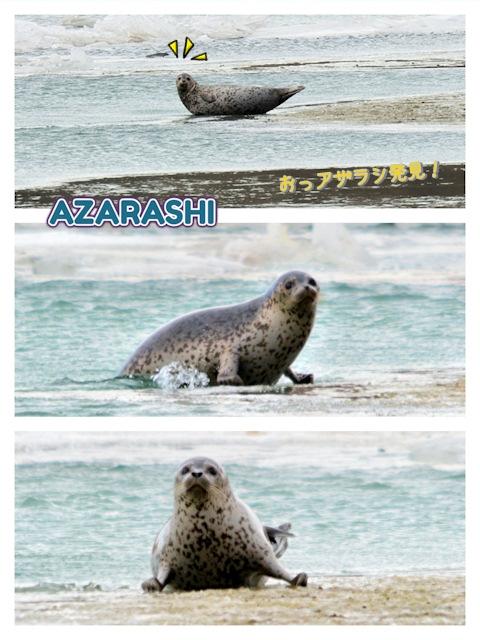 20170112azarashi.jpg