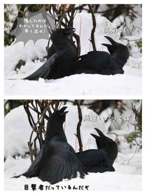 20170124karasu1.jpg