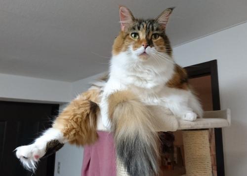 小豆猫3歳