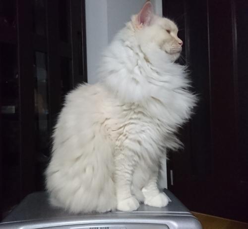 まん丸白玉猫_2