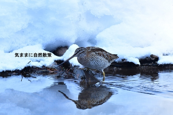 170108北大研究林 (1)