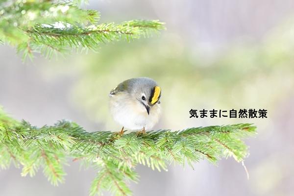 170108北大研究林 (2)