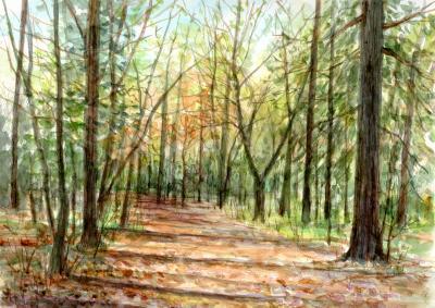 WEB森の散歩道