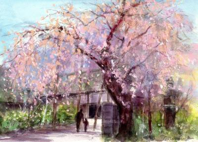 WEB喜多院の桜