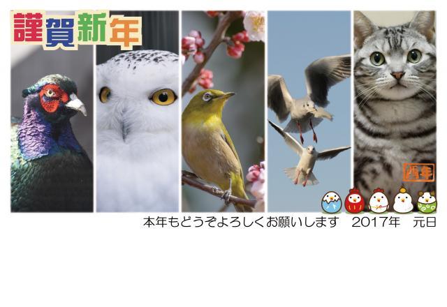年賀状2017とり640