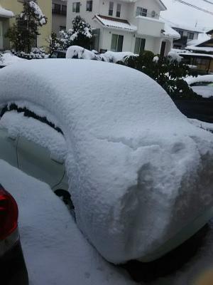 1.24雪が積もった